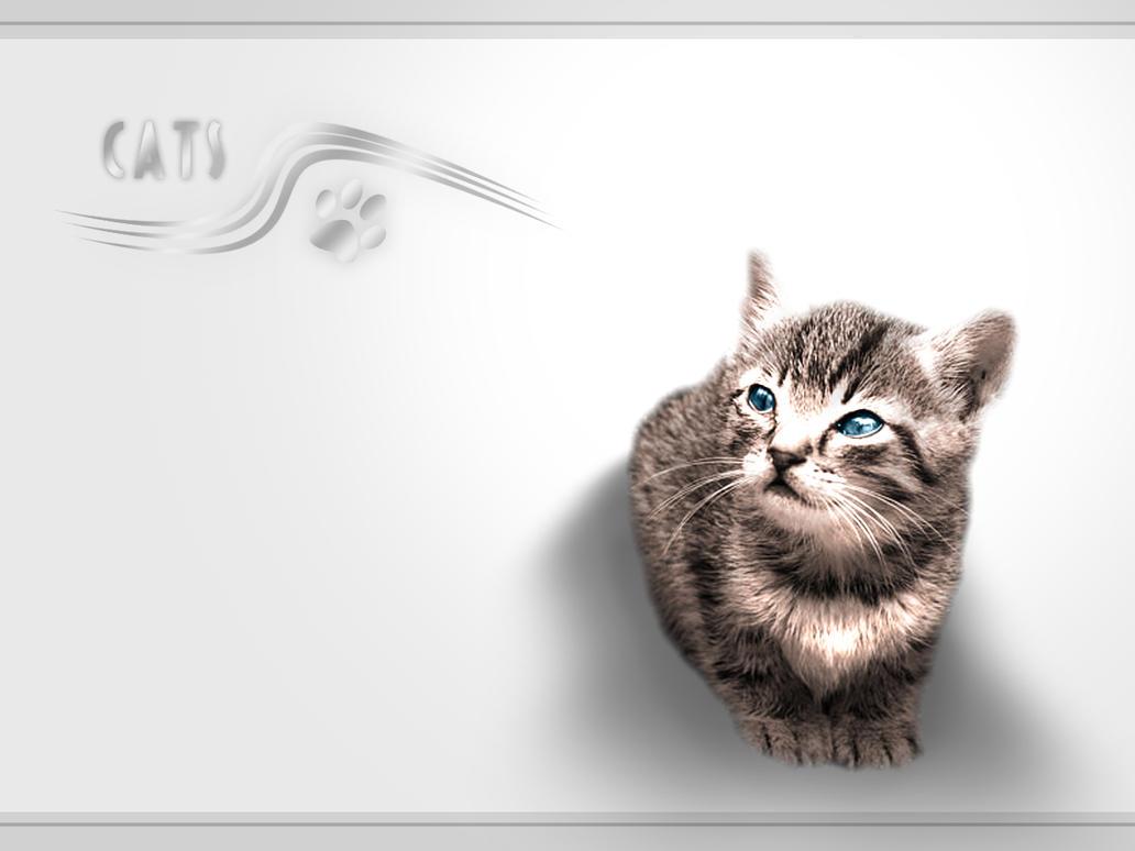 Cats by ZietasMiH