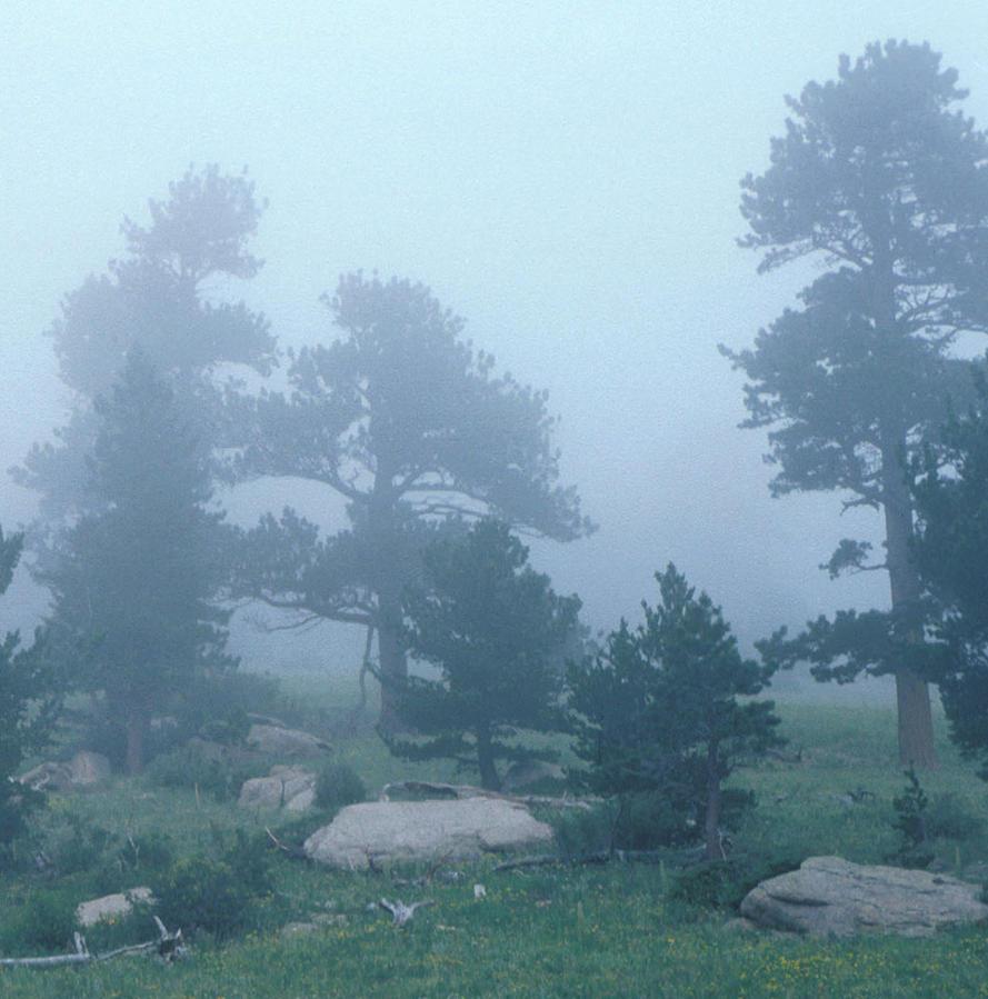 Fog by jimbkcoyweatherman
