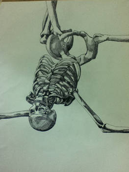 fine liner skeleton