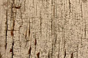 woodsketch by mistyt-stock
