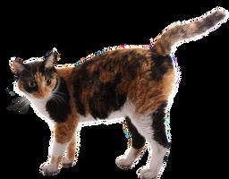 a Cat by mistyt-stock