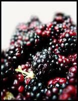 Raspberry by stimpy39
