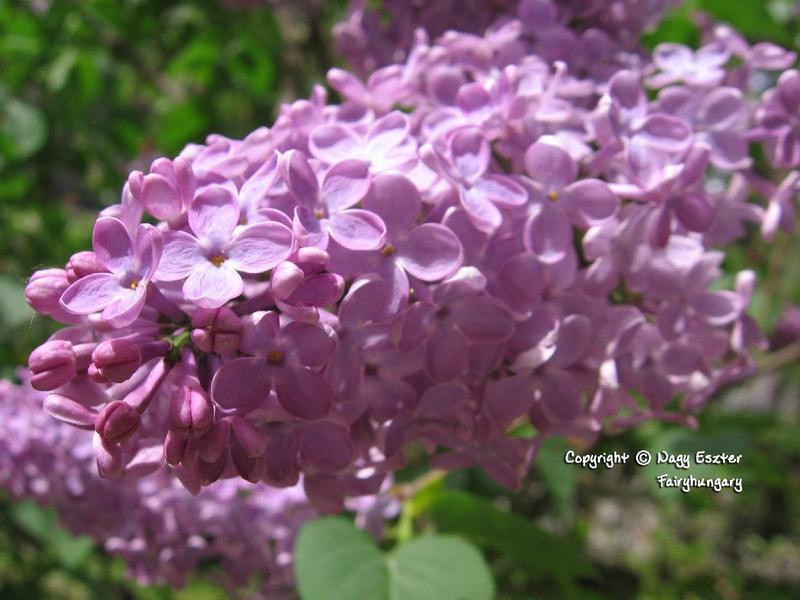 Spray of flowers by Fairyhungary