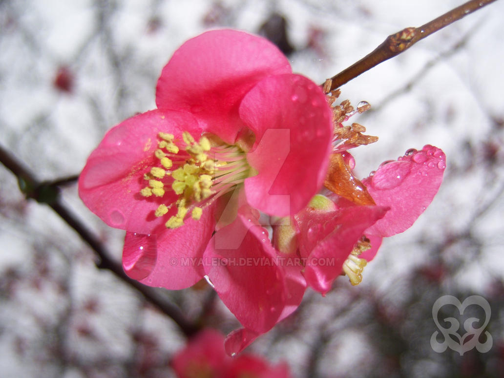 Pink in the Rain 2 by myaleigh
