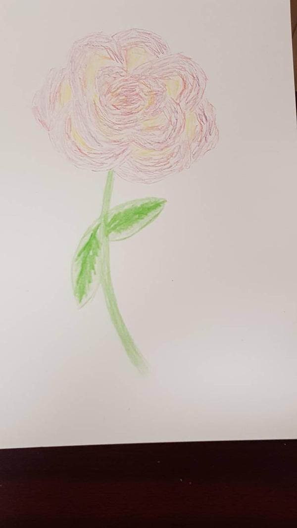 Rose - Watercolor pencils dry (1 of 3)