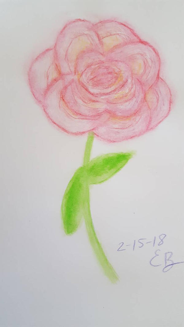 Rose - watercolor pencils dry over wet (3 of 3)