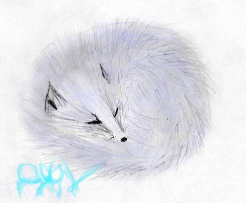Arctic Fox by dzhu
