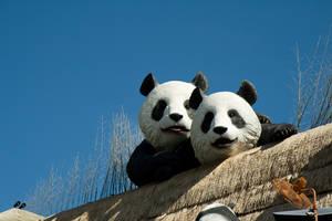 2 Pandas by parka