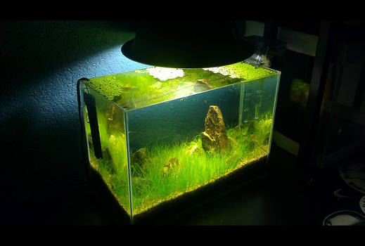 Iwagumi - Nature Aquarium