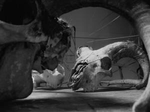 skulls - black and white