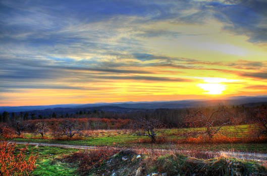 Sunset over a New Hampshire Apple Orchard