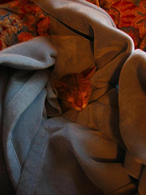 Sleeping Kitten by mmiller8