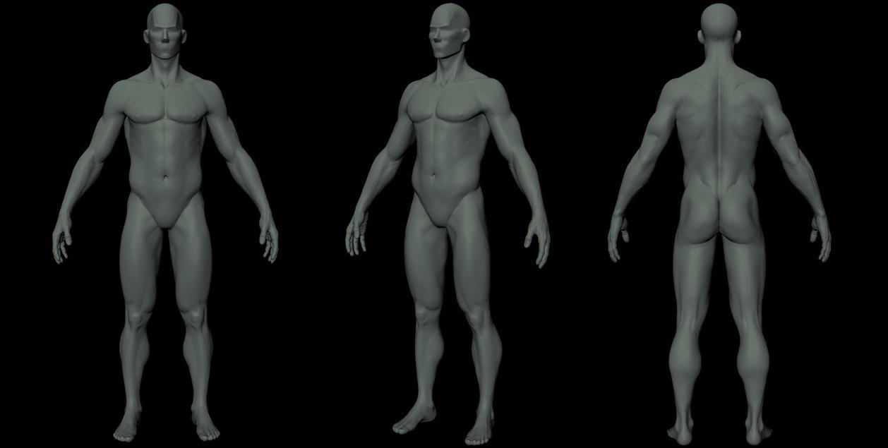 Male Anatomy Study by VikingWarband on DeviantArt