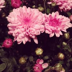 Memories of Summer Bloom by fotomademoiselle