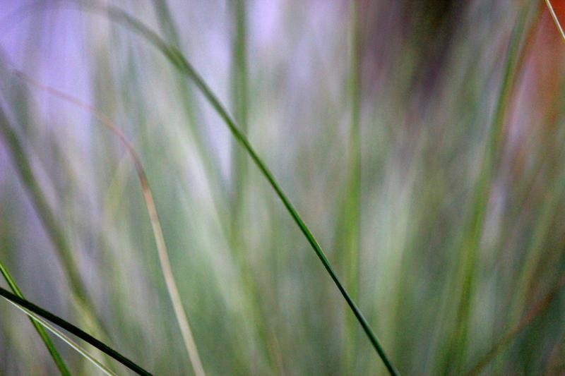 blending by fotomademoiselle