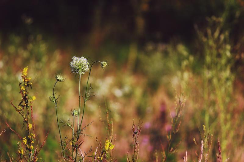 sweet as maple by fotomademoiselle