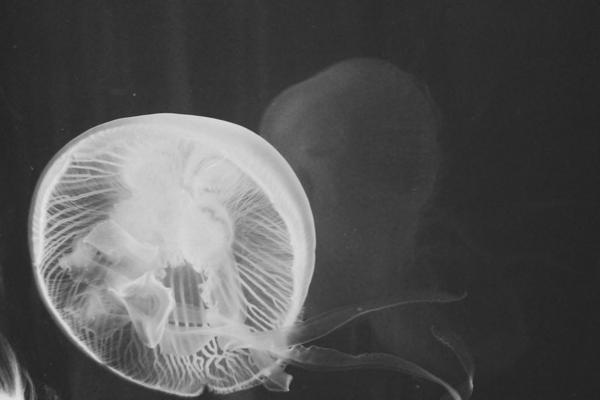 the thing about jellyfish by fotomademoiselle