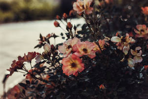 summer flora by fotomademoiselle