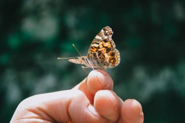holding transformation