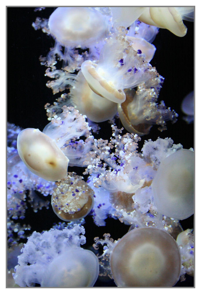 Jelly Fish by xDayx