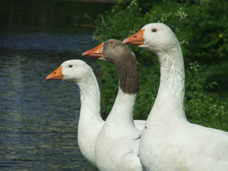threesome 2 by helenafl