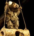 Silk Monkey