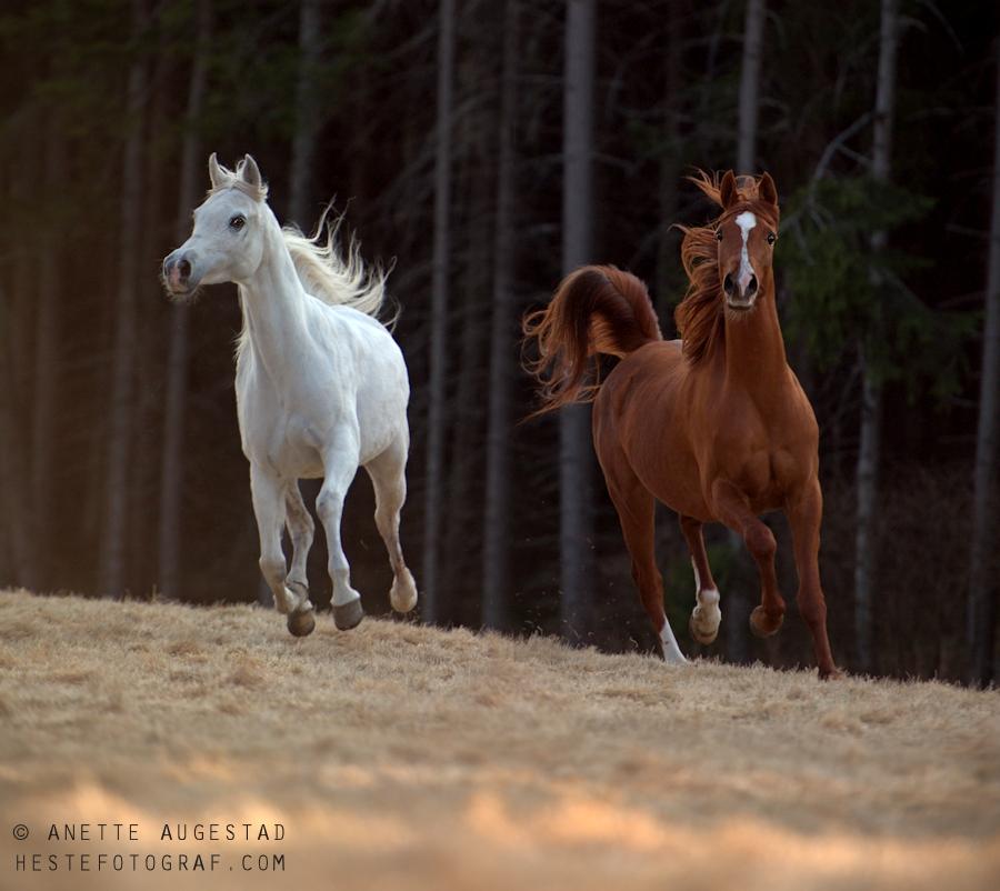Freedom by Hestefotograf