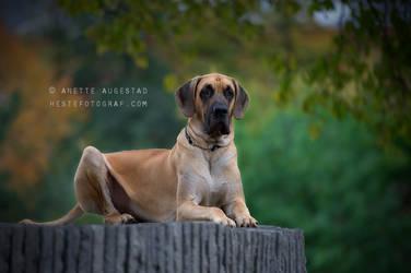 Watchdog by Hestefotograf