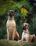 Two Proud Dogs