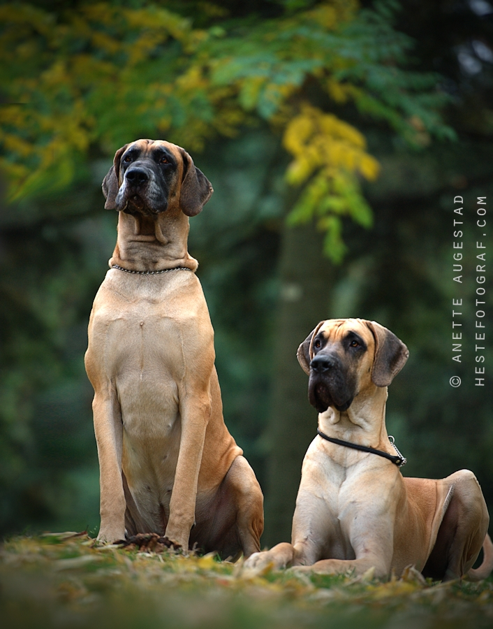 Two Proud Dogs by Hestefotograf