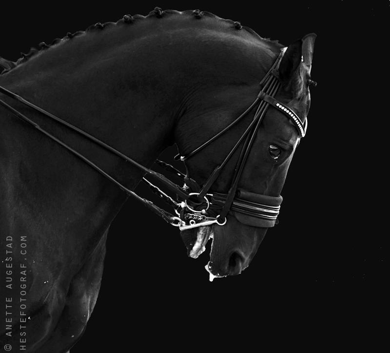 Distress by Hestefotograf