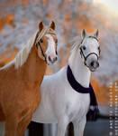 Christmas Ponies 2