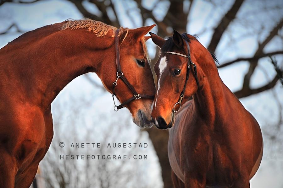 Rochel And Her Boyfriend by Hestefotograf