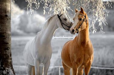 A Horse Whisper by Hestefotograf
