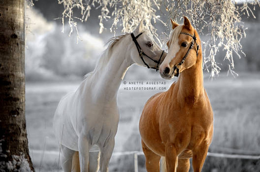 A Horse Whisper