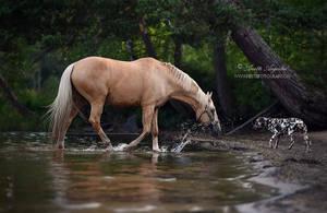 Horse Meets Dog by Hestefotograf