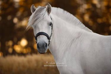 Lilja by Hestefotograf