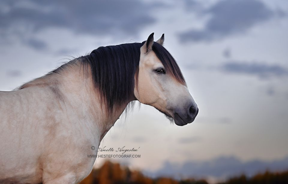 Borken by Hestefotograf