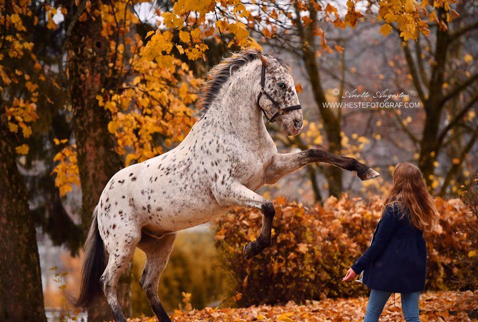 Autumn Fun by Hestefotograf
