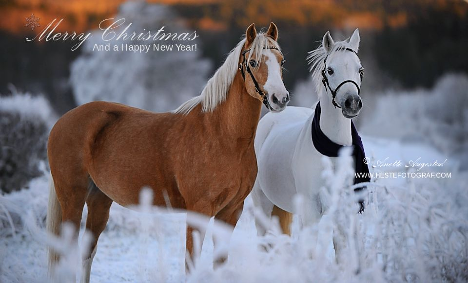 Merry Christmas! by Hestefotograf