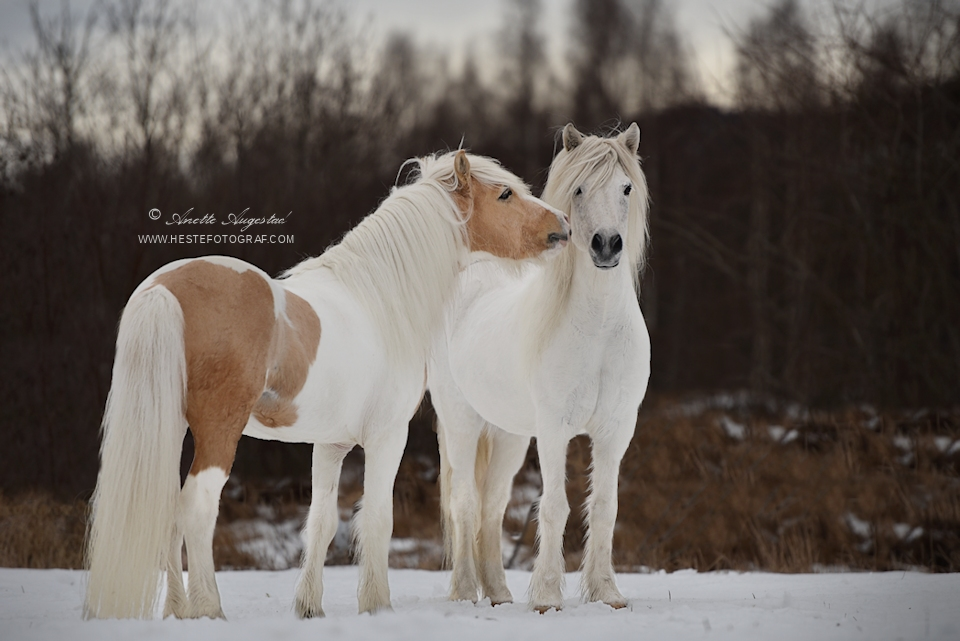 Winter Is Ending by Hestefotograf