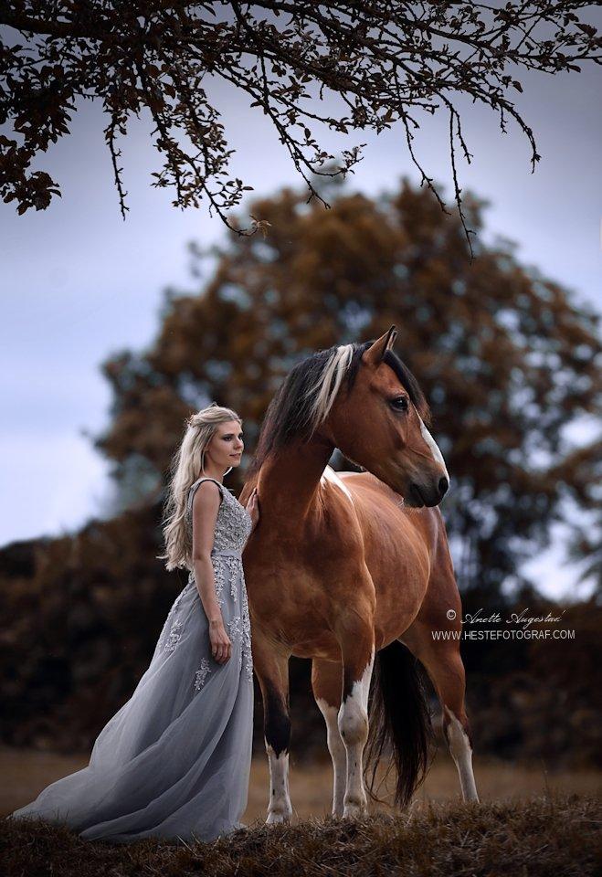 Twilight by Hestefotograf