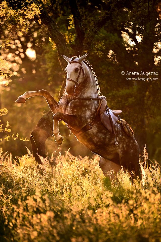 Golden by Hestefotograf