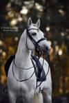 Dressage Horse 2 by Hestefotograf