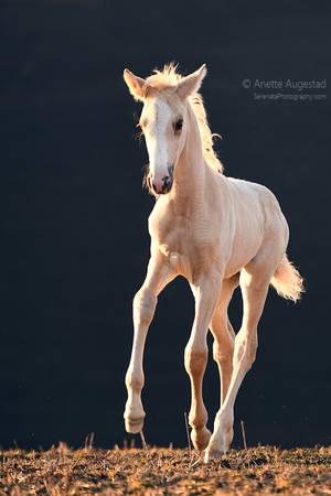 Sahara by Hestefotograf