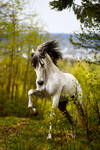 Fierce by Hestefotograf