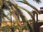 Moroccan Hotel no.5