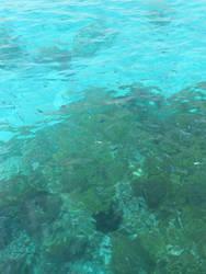 The Blue Lagoon, Malta no.4