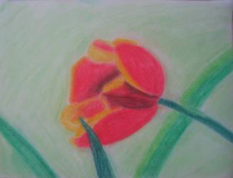 Tulip by Ibotsu