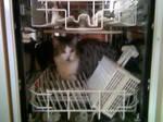 dishwasher hideout